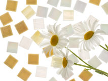 Beautiful smalt and three daisies Royalty Free Stock Images