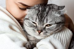Beautiful smiling brunette girl and her cat royalty free stock image