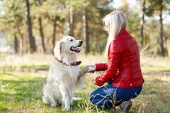 Beautiful smiling dog walking with owner outdoors. Pet concept. stock image
