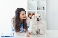 Beautiful smiling veterinarian doctor and cute white dog. Pet care Stock Photography