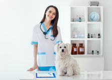 Beautiful smiling veterinarian doctor and cute white dog in vet. Clinic. Pet care Royalty Free Stock Images