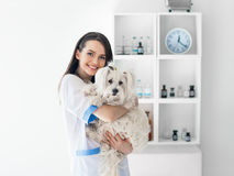 Beautiful smiling veterinarian doctor holding cute white dog. Pet care Stock Photography