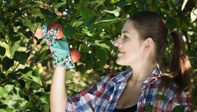 Beautiful smiling woman at garden looking at apples Royalty Free Stock Photo