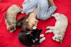 A beautiful smiling woman with a ponytail and wearing a striped shirt is playing with three sweet husky puppies while stock images