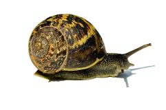 Beautiful Snail Stock Images