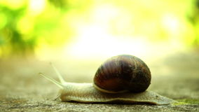 Beautiful Snail Crawling In Nature, Sound stock footage