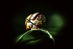 Beautiful snail. In the garden Stock Photo