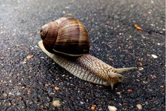 Beautiful snail on the road stock photos