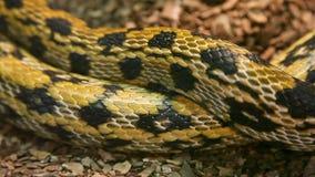 Beautiful snake stock video footage