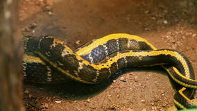 Beautiful snake stock video