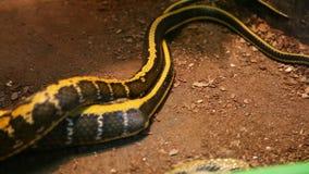 Beautiful snake stock footage
