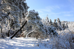 Beautiful Snow Royalty Free Stock Photos