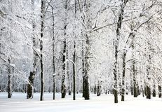 Beautiful snow branches of russian winter Stock Photos