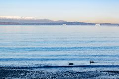 Early morning at the beach on Puget Sound stock images