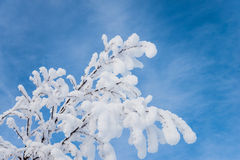Beautiful snow covered branches against a beautiful blue sky. Beautiful winter picture of a tree with snowy branches by half a clear sky in the background Royalty Free Stock Photos