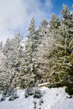 Beautiful snow-covered fir trees in winter forest. French mountains Stock Photography