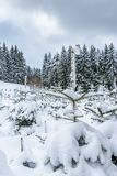 Snow-covered firs in a winter landscape. stock image