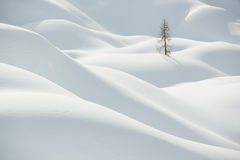 Beautiful snow covered hills with pine tree, winter landscape Stock Photos