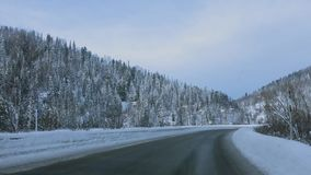 Beautiful snow-covered road through a pine forest. HD, 1920x1080 stock footage