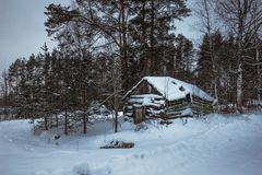 Beautiful snow covered tall trees and old wood house in a winter forest stock photo