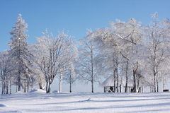 Beautiful snow-covered tree. On the background of blue sky Royalty Free Stock Image