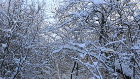 Beautiful snow covered tree branches in winter park. Vertical panorama stock footage