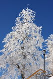 Beautiful snow-covered trees. In the bright blue sky Stock Images
