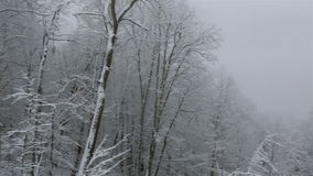 Beautiful snow covered trees in mountains stock video footage