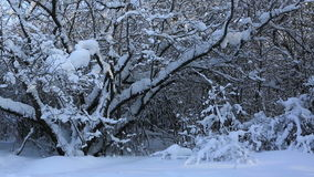 Beautiful snow covered trees in winter park stock video
