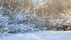 Beautiful snow covered trees in winter park. Horizontal panorama stock video footage