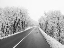 Beautiful Snow Forest And Road Stock Images