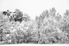 Beautiful snow and frost covered trees Stock Photo