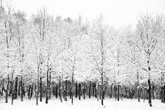 Beautiful snow and frost covered trees Royalty Free Stock Image