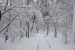 Snow road in winter forest royalty free stock photo