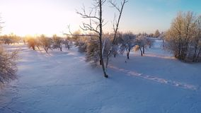 Beautiful snow landscape. Winter trees. Sunset. Aerial footage. Beautiful snow landscape. winter trees panorama. Sunset. Aerial view. Fly over trees covered stock footage