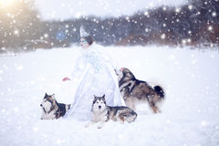 Beautiful snow queen with dogs Stock Photo