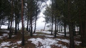 Beautiful snow. Sidi bel abbes. algeria royalty free stock photo