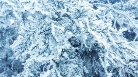 Beautiful snow tree Royalty Free Stock Photos