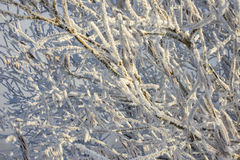 Beautiful snow winter pattern. In Siberia stock photos