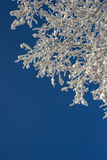 Beautiful snow winter pattern. In Siberia stock images