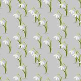 Beautiful snowdrop flowers Galanthus nivalis. Vector seamless pattern.  Royalty Free Stock Image