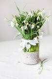 Beautiful snowdrop flowers in a transparent vase Royalty Free Stock Image