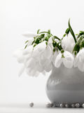 Beautiful snowdrops in a bouquet Royalty Free Stock Photo