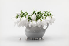 Beautiful snowdrops in a bouquet Royalty Free Stock Photos