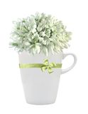 Beautiful snowdrops in cup isolated on white Stock Photography