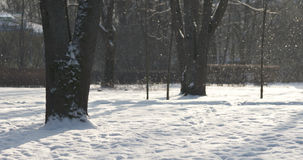 Beautiful snowfall background in town park in sunny morning Royalty Free Stock Photo