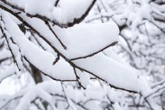 Beautiful snowfall. Snow on the branches of bushes. And trees Royalty Free Stock Photo