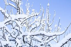 Beautiful snowfall. Snow on the branches of bushes. And trees Royalty Free Stock Images