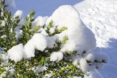 Beautiful snowfall. Snow on the branches of bushes. And trees Royalty Free Stock Photography