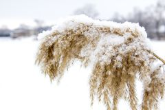Beautiful snowfall. Snow on the branches of bushes. And trees Stock Images